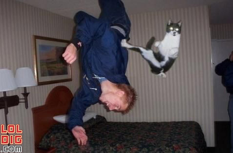 karate-flying-cat-funny-picture