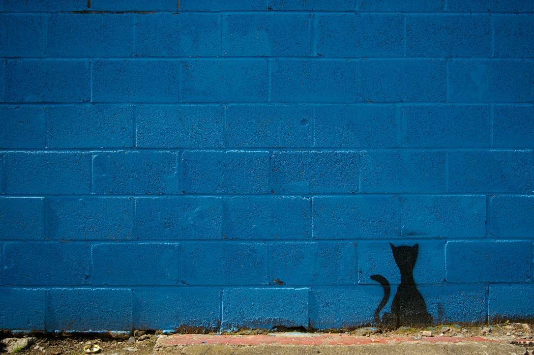 bluecat_whalleyrange